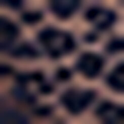Culotte de encaje azul Leopard Line, , DIM