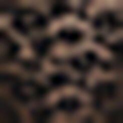 Braguita de encaje negro Leopard Line, , DIM