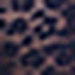 Braguita de encaje azul Leopard Line, , DIM